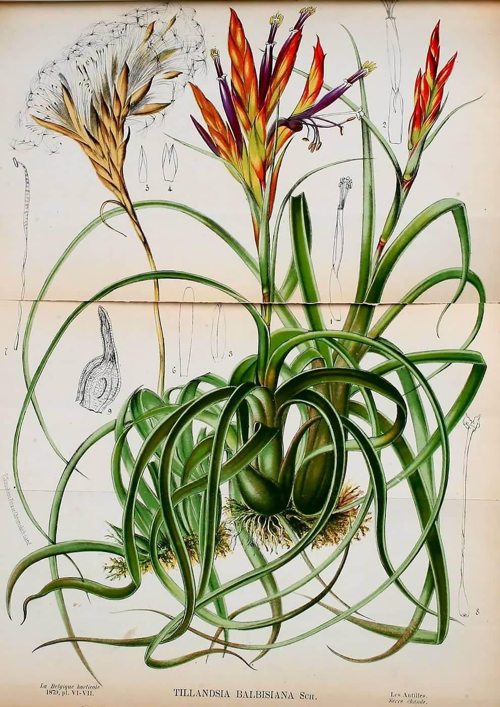 dibujo de planta
