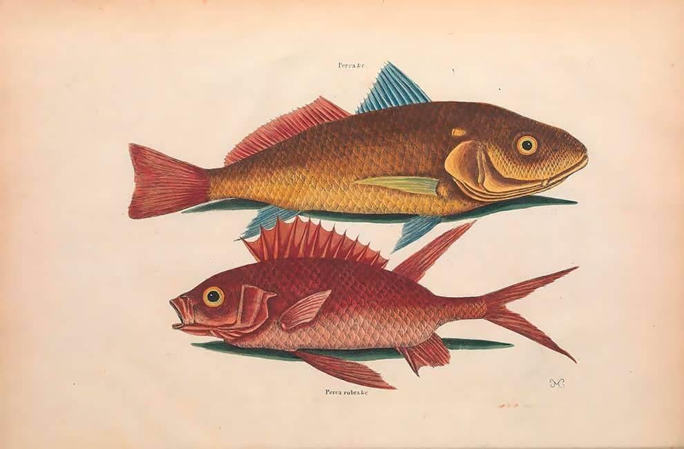 Ilustración en descarga gratuita de peces de la biblioteca para biodiversidad