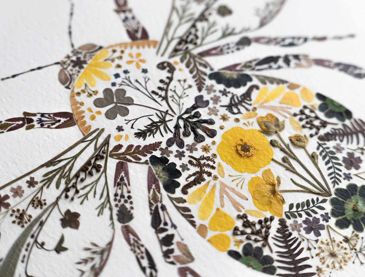la mezcla de la botanica seca y la ilustración