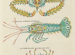 primeras ilustraciones del mundo marino Louis Renard