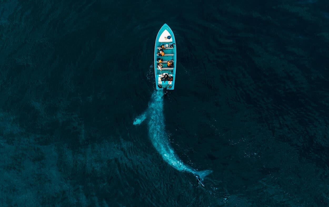 Gray Whale Plays Pushing Tourists naturaleza