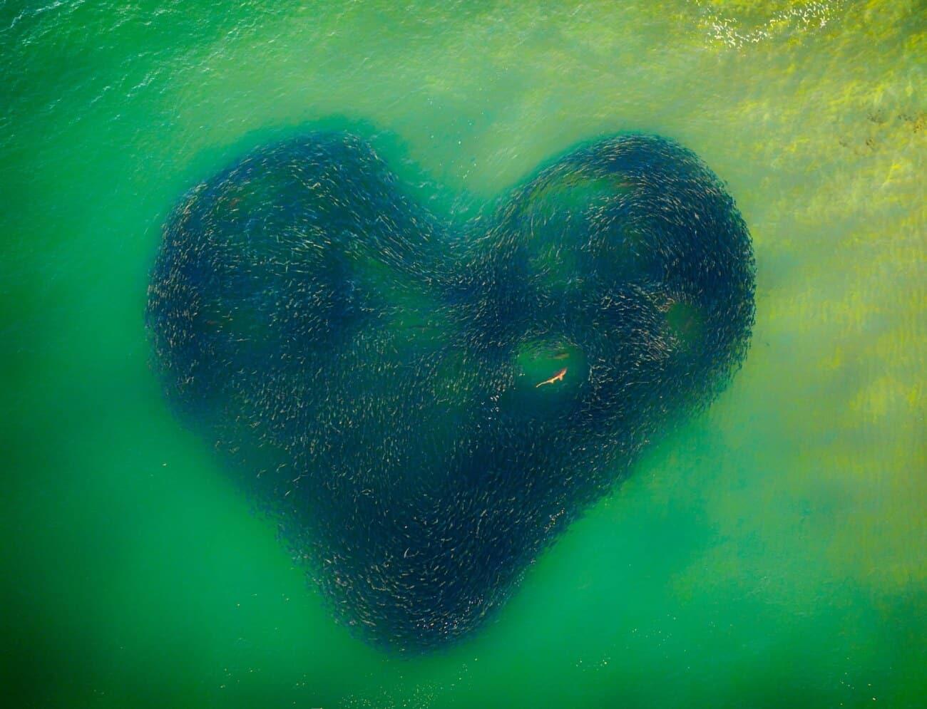 Love Heart of Nature mejor fotografia del año