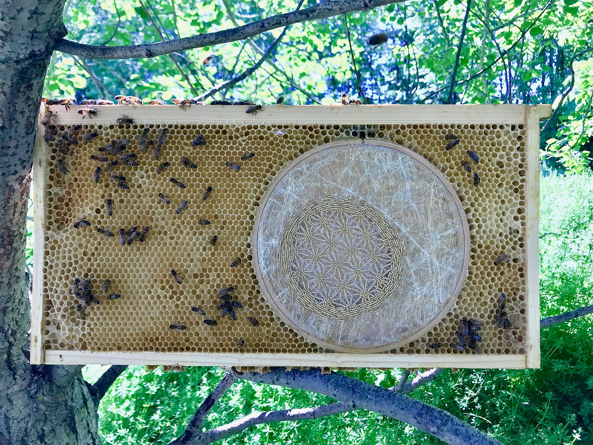 ava roth y las abejas