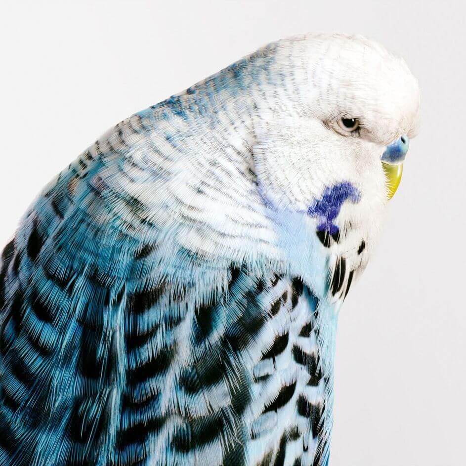 aves fotografia leila jeffrys