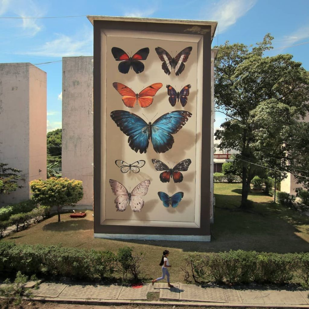 coleccion de mariposas mantra tridimensional