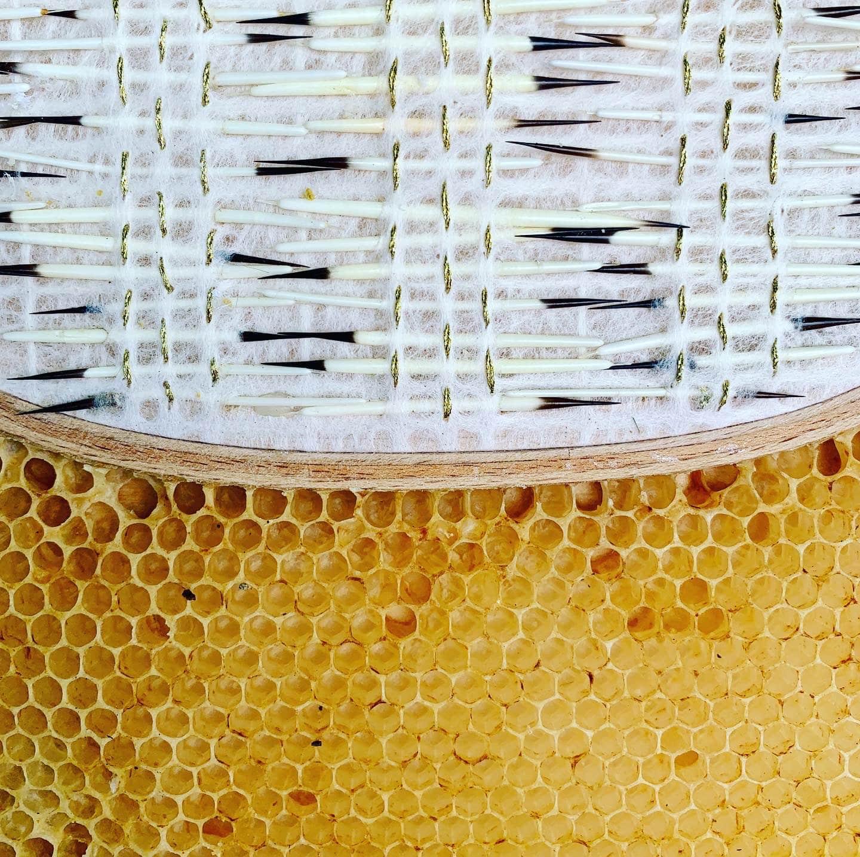 cosido ava roth y abejas