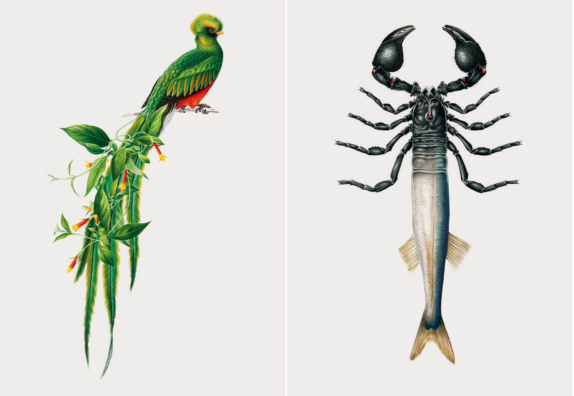 especies creativas hibridos