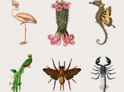 especies creativas todas