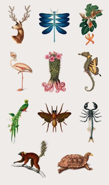 especies creativas todas