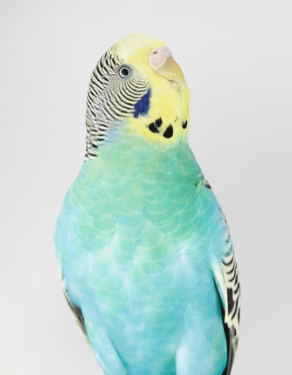 leila jeffreys aves retratos