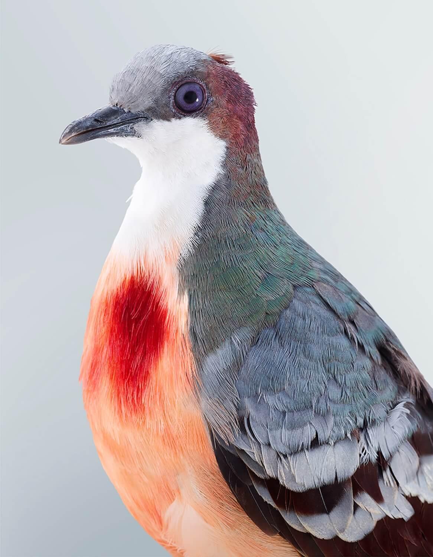 leila jeffreys retratos aves