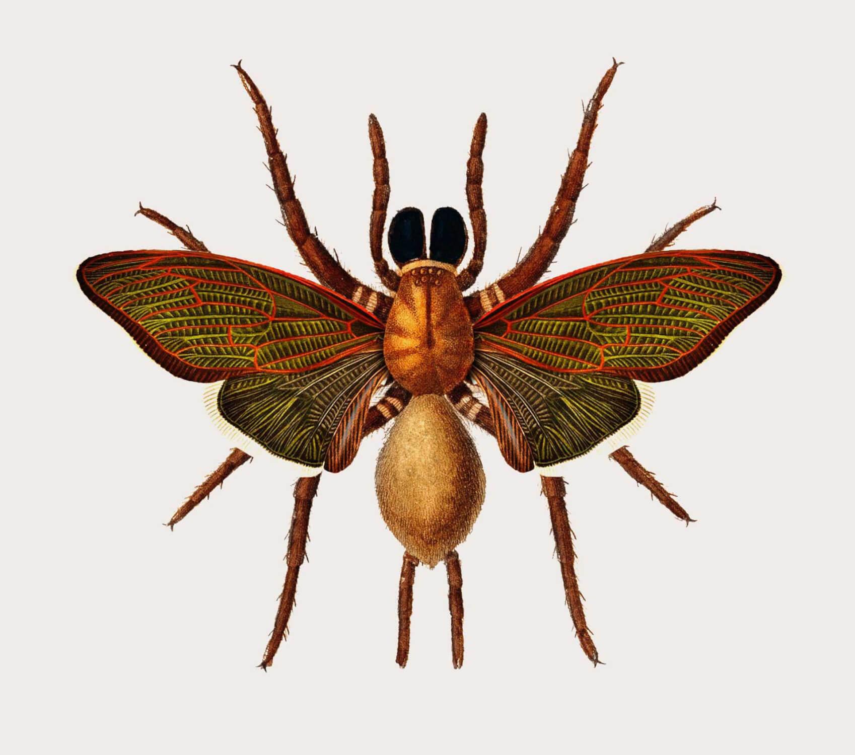 mosca mariposa especies creativas