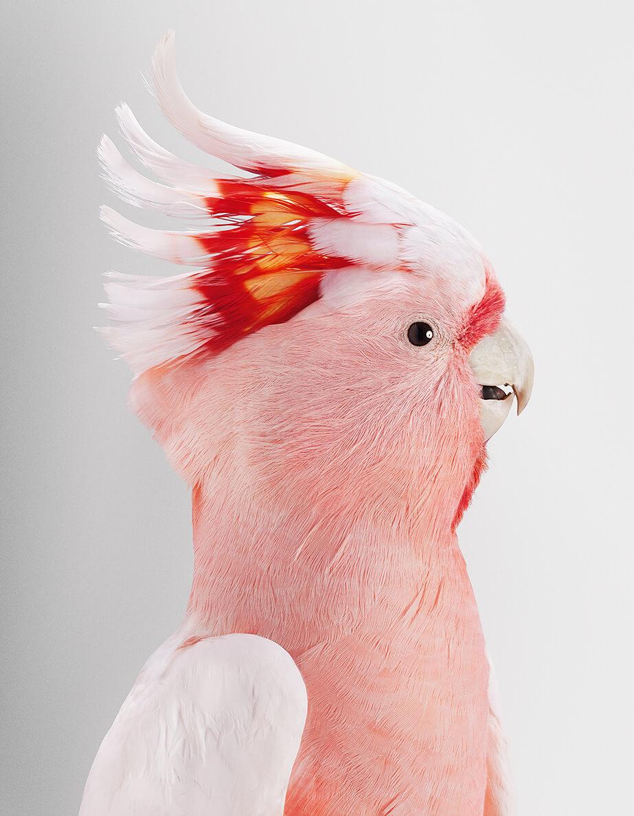 pink bird leila jeffreys