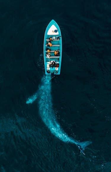portada 10 mejores fotos dron 2020
