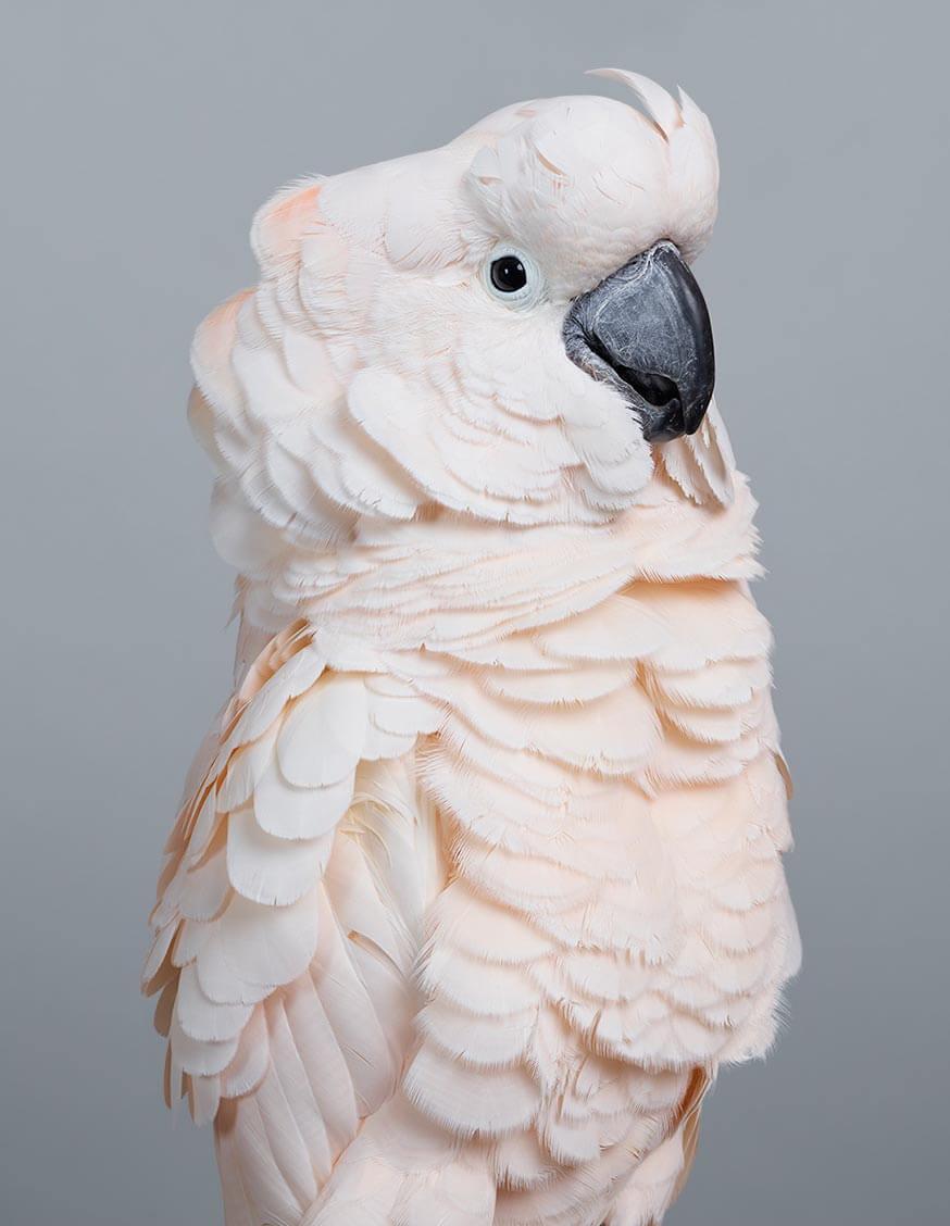 retratos elegantes de aves de leila jeffreys