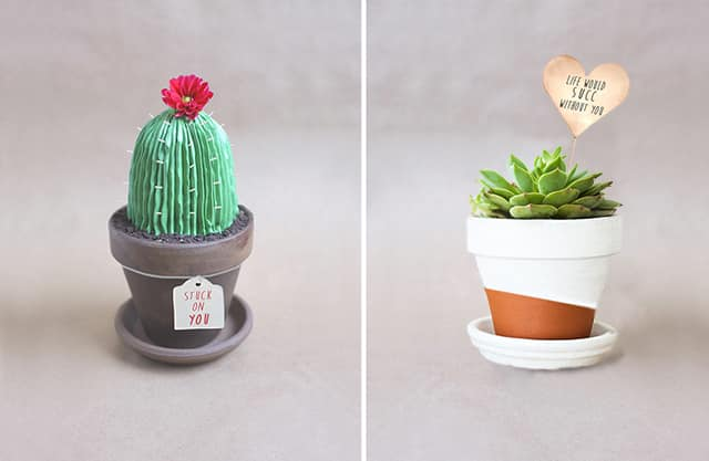 suculentas y cactus alana jones mann