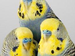 tweets aves leila jeffrys