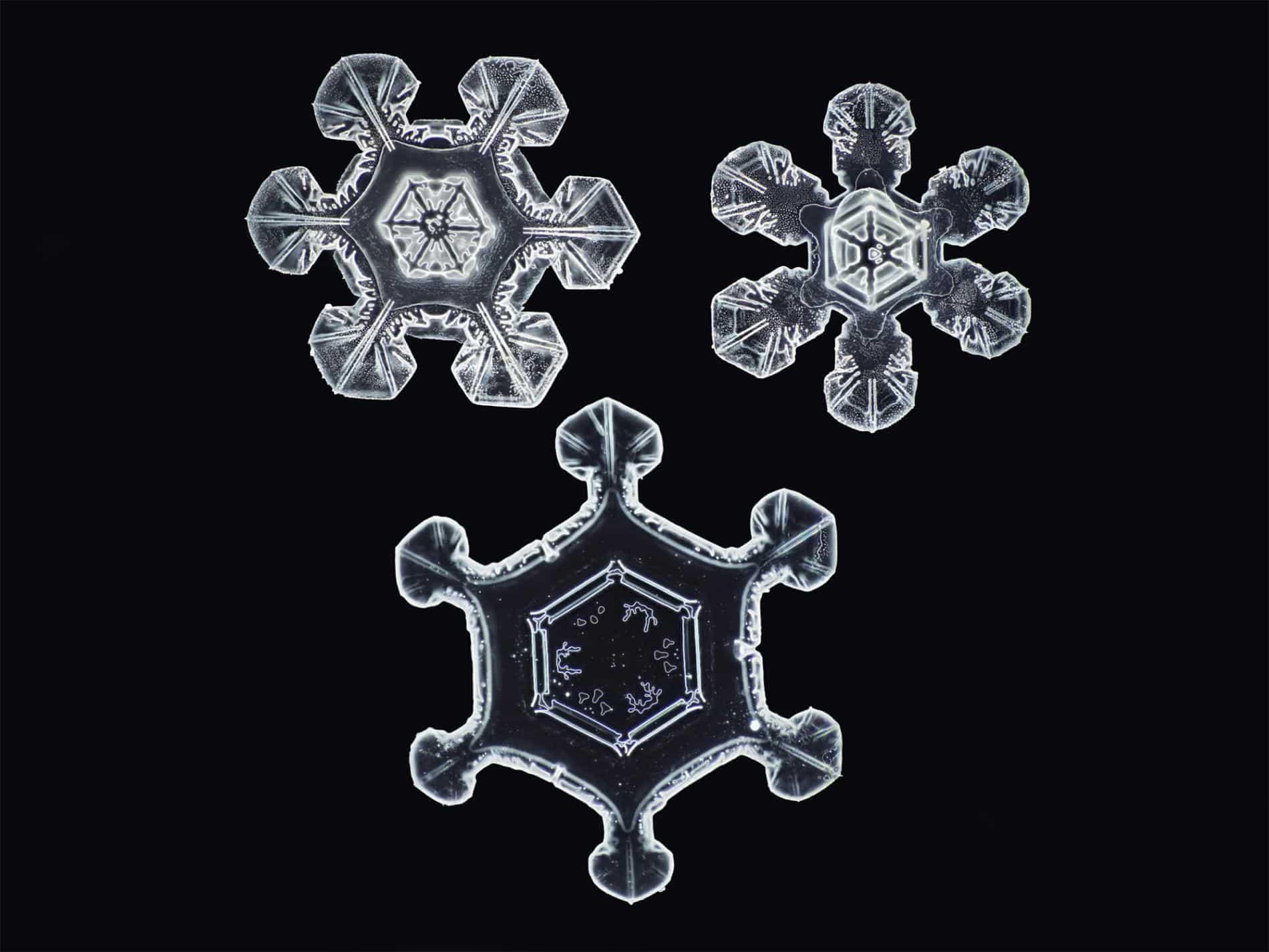 formas nieve myhrvold