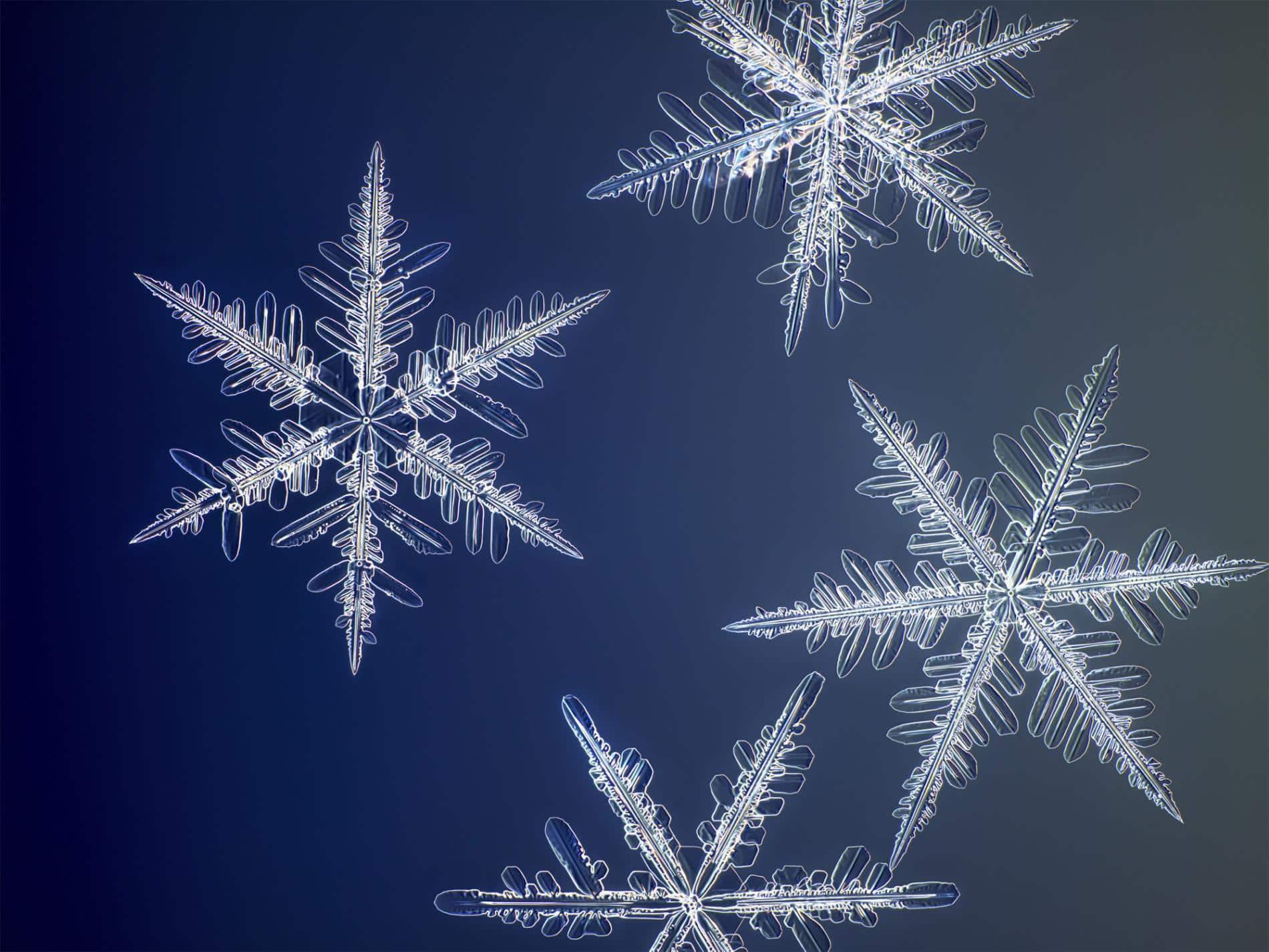 myhrvold copos de nieve