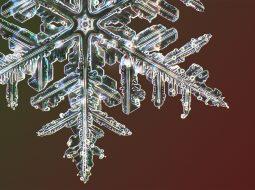 myhrvold nieve micro
