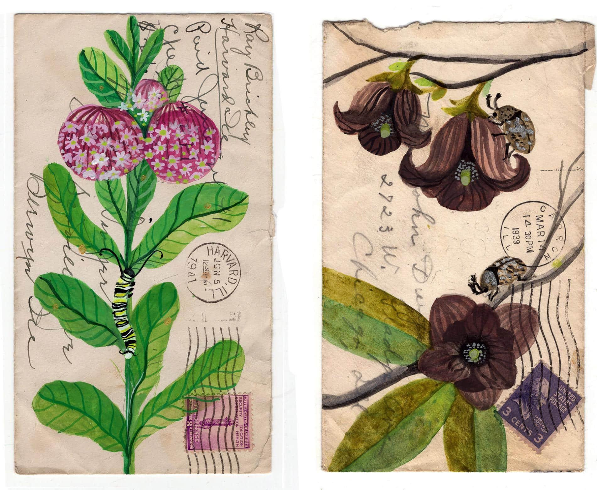 postales animales diana sudyka flores