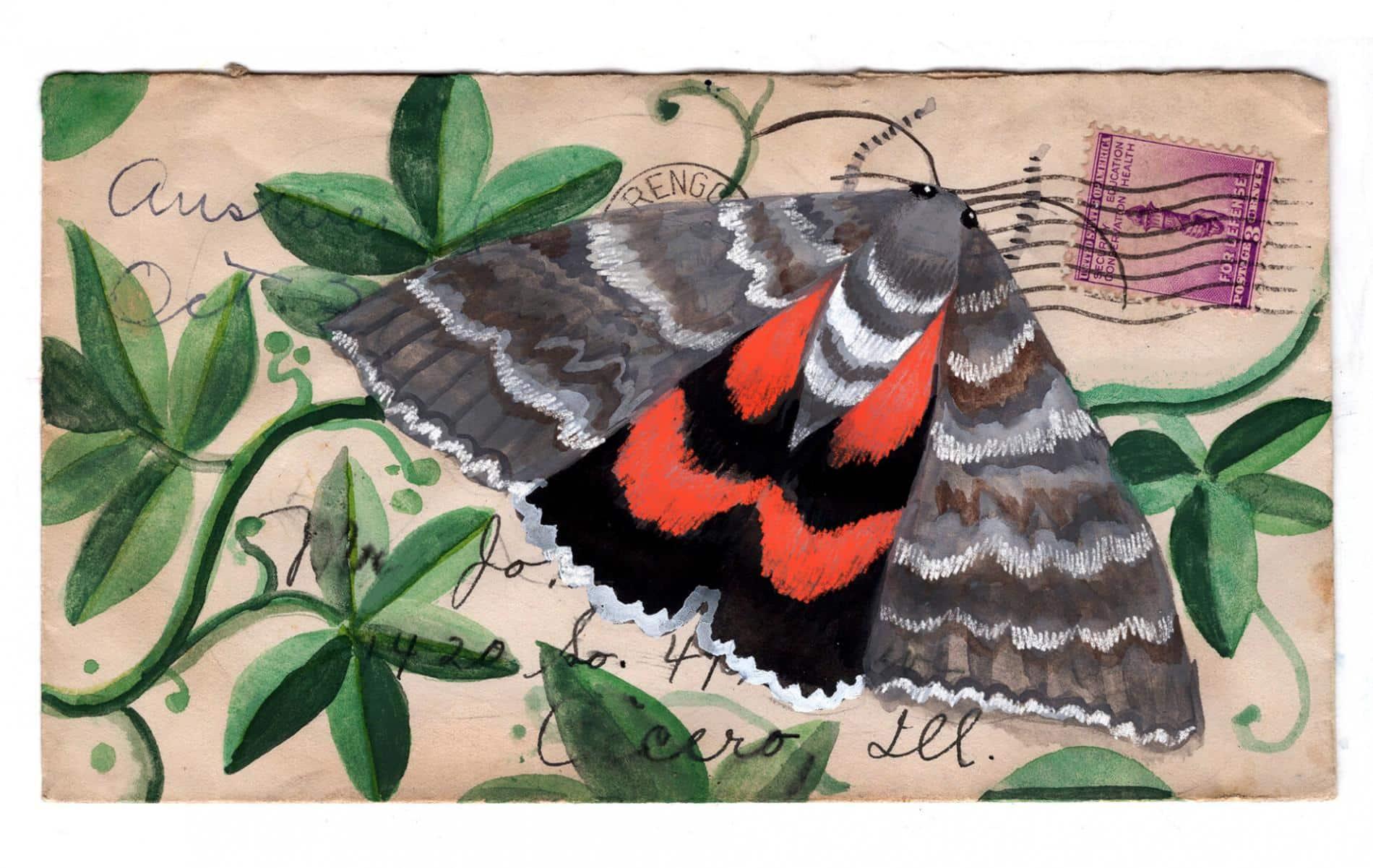 postales animales diana sudyka mariposa