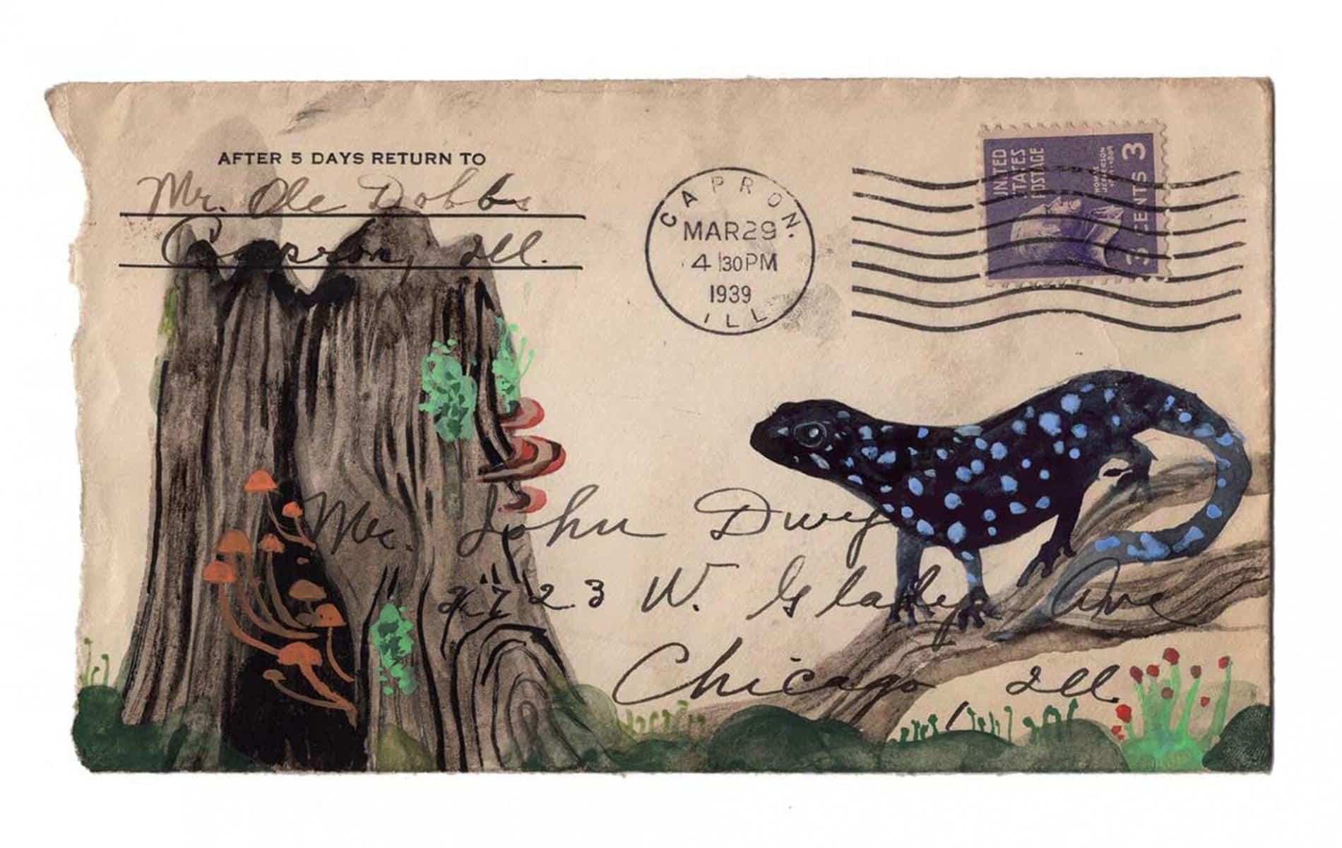 postales animales diana sudyka salamandra
