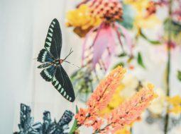 biodiversidad clare boersch mariposas