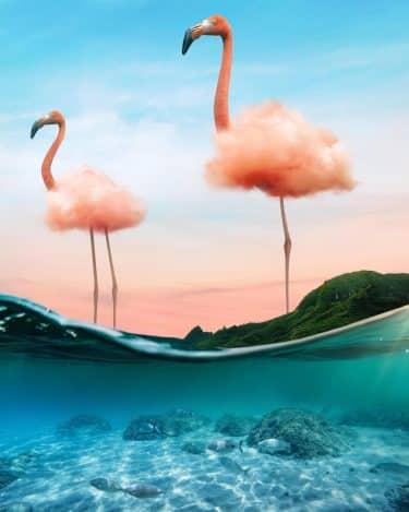 el pequeño mundo de ted flamingo