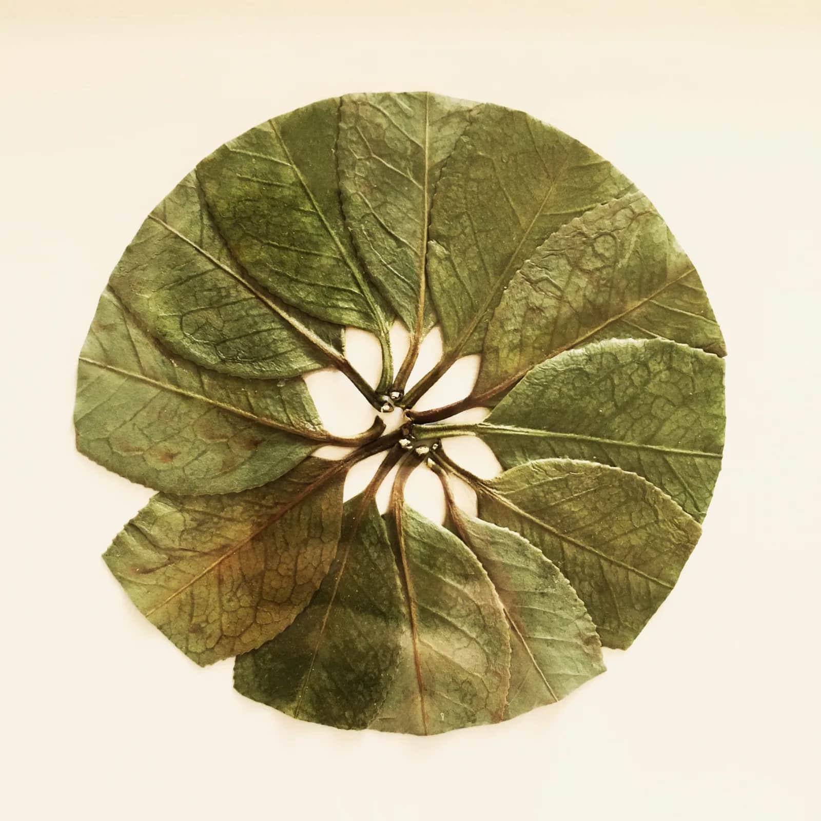 hillary bordado botanico hojas arte