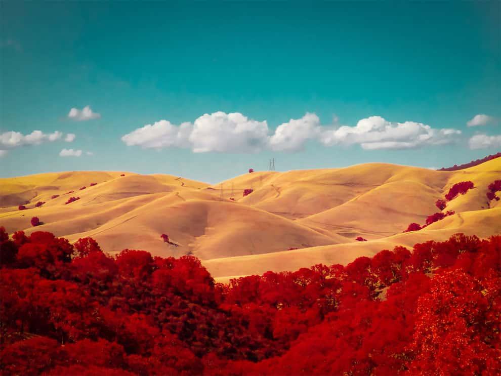 Golden Hills, Kolari Pocket winner. (Photo by Rob Shea
