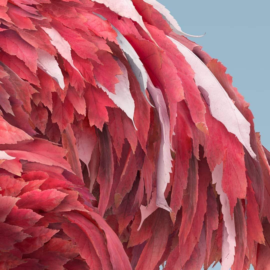 josh dykgraaf flamingo de hojas detalle
