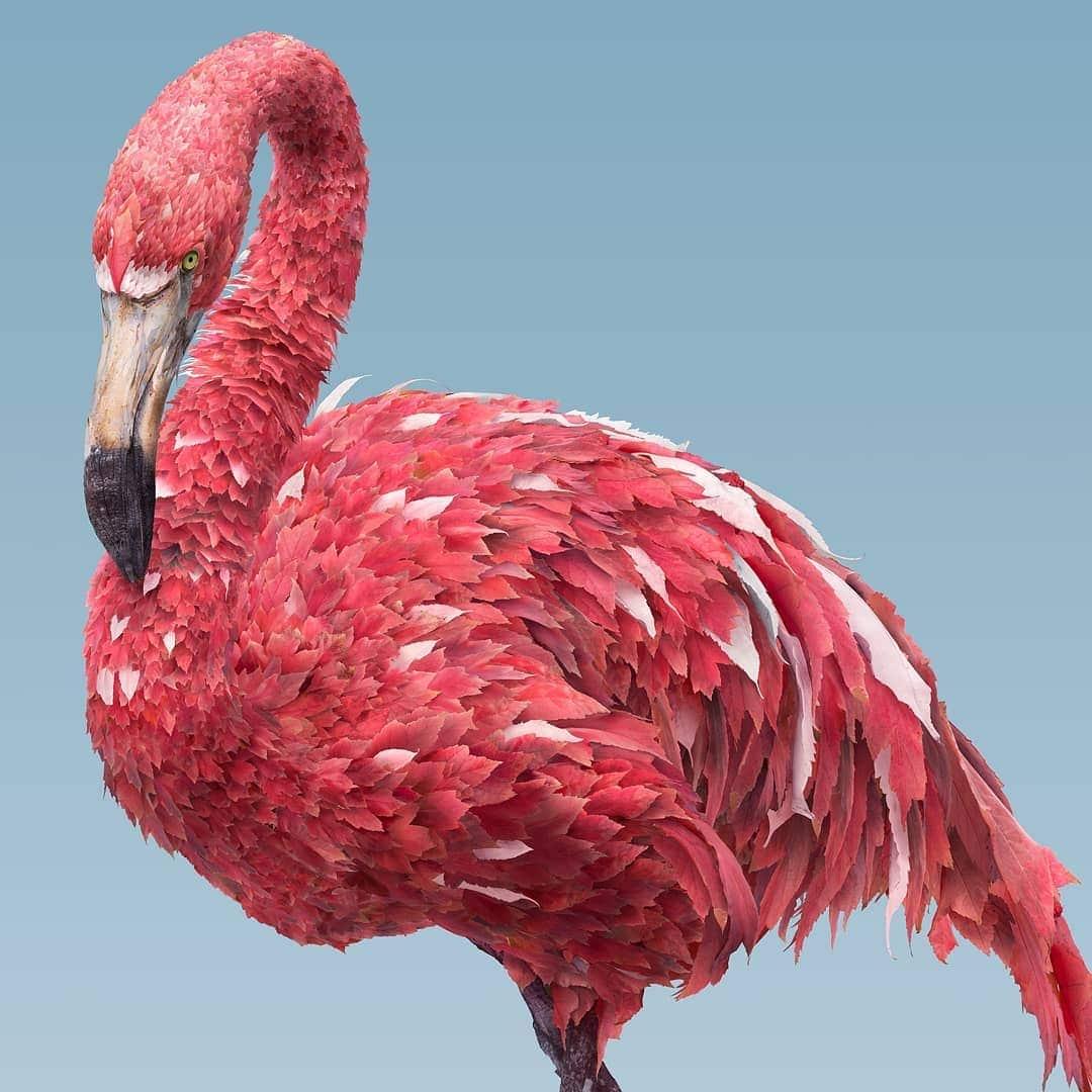 josh dykgraaf flamingo de hojas