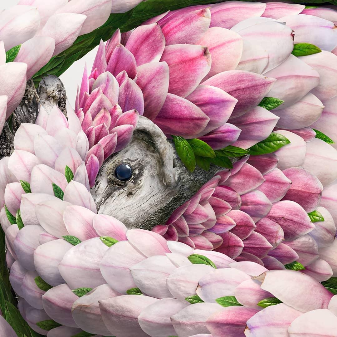 josh dykgraaf petalos animal magnolia detalle