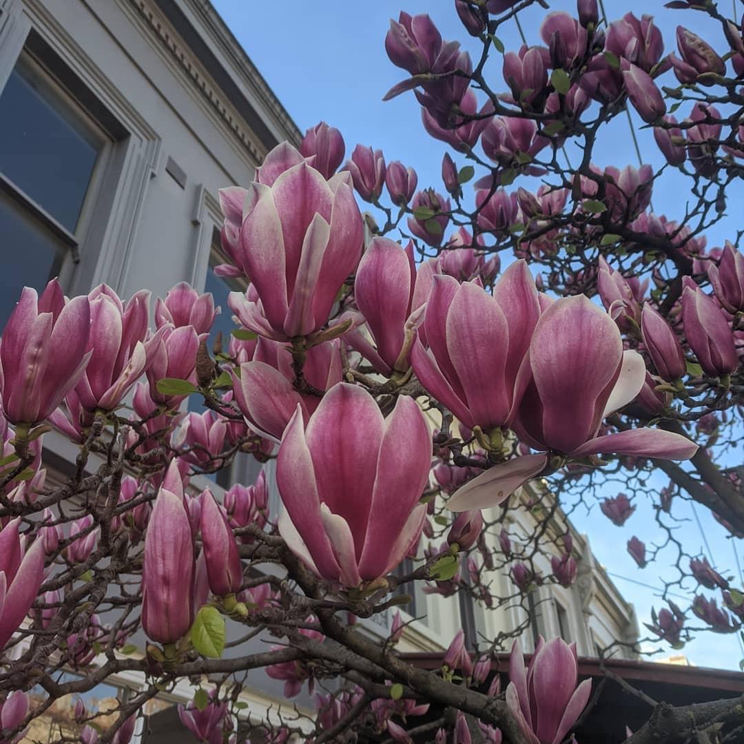 josh dykgraaf petalos animal magnolia real
