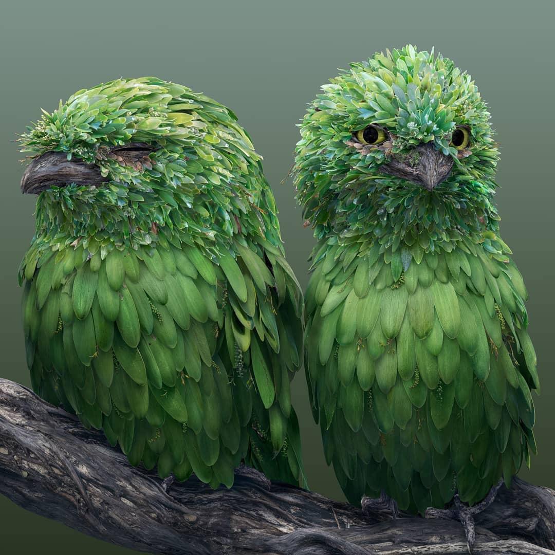 josh dykgraaf petalos animal periquitos