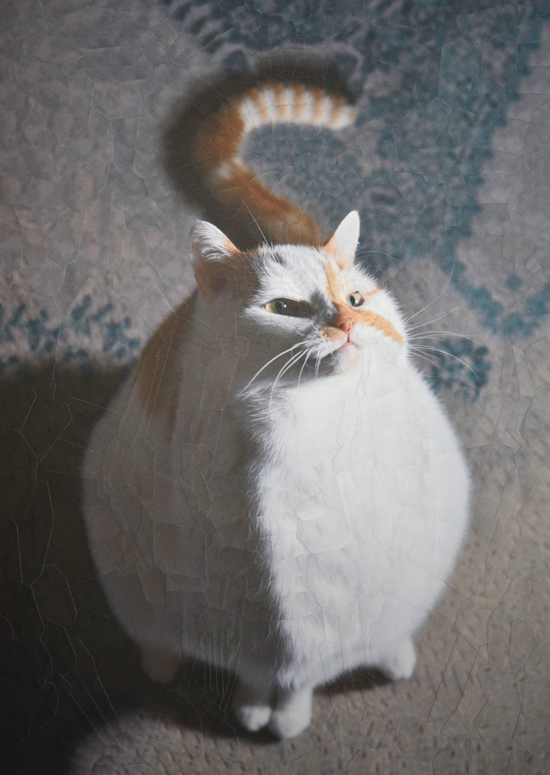 lola dupre gato collage