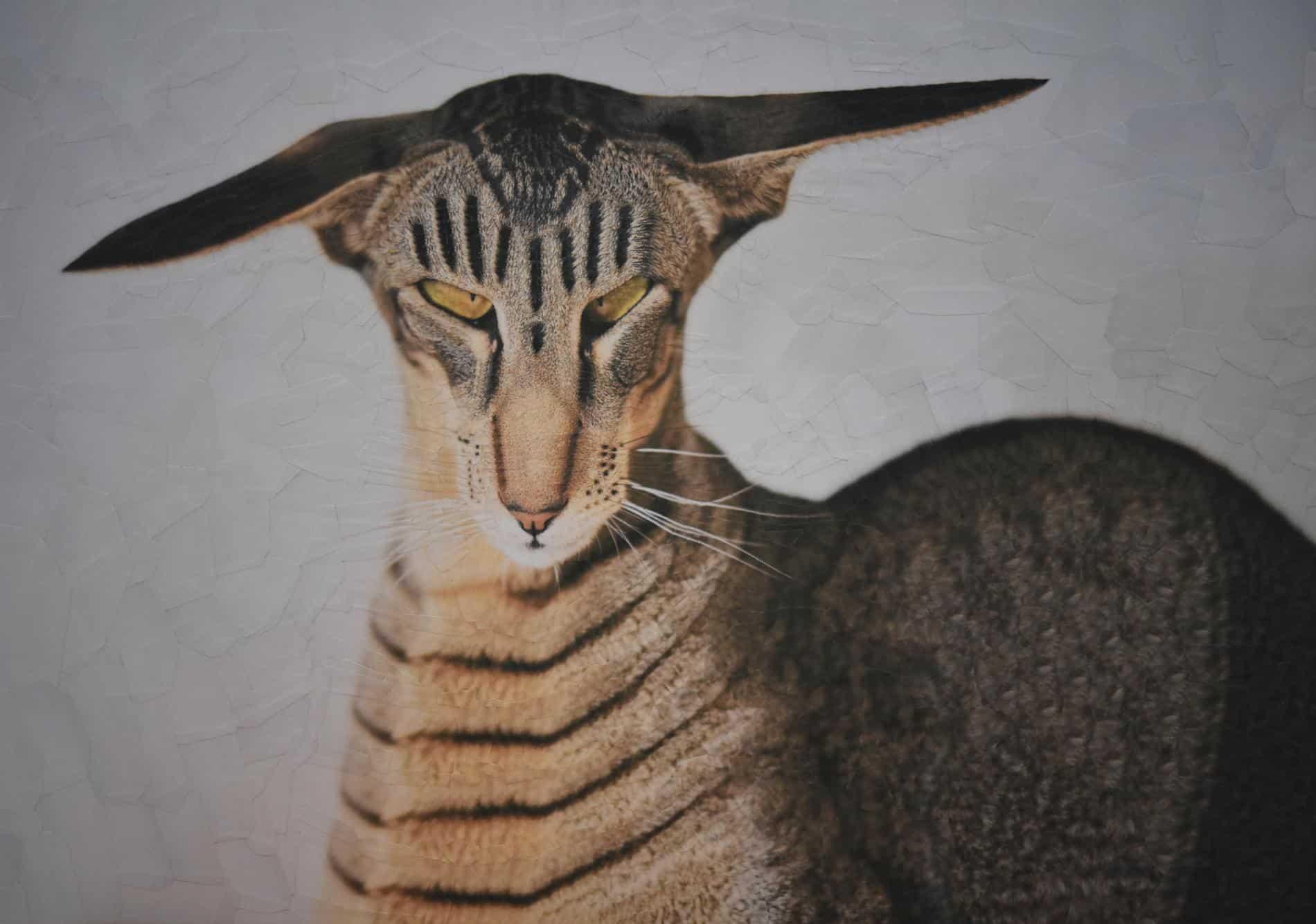 lola dupre otro gato collage