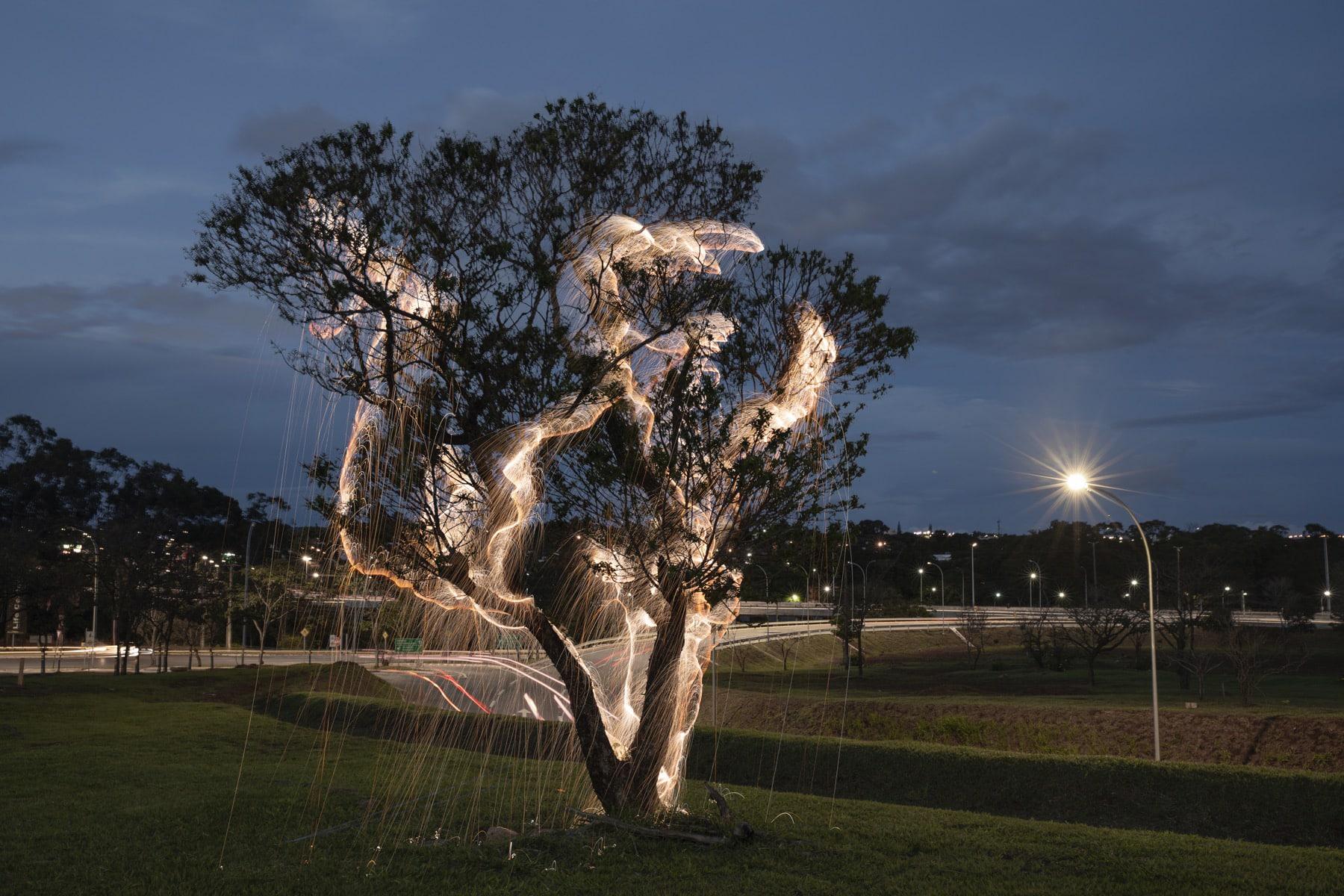 rayos de luz fotografiavitor schietti arboles