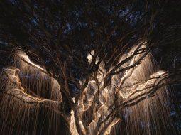 rayos de luz fotografiavitor schietti lux