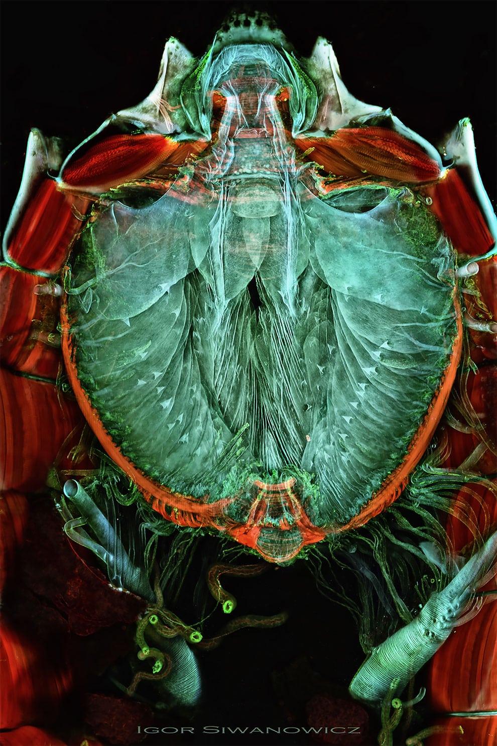 fotografo polaco microscopio fluorescente 10