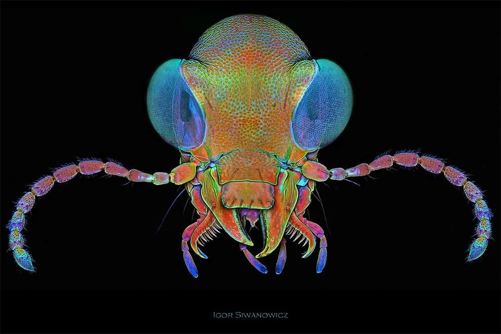 fotografo polaco microscopio fluorescente 12