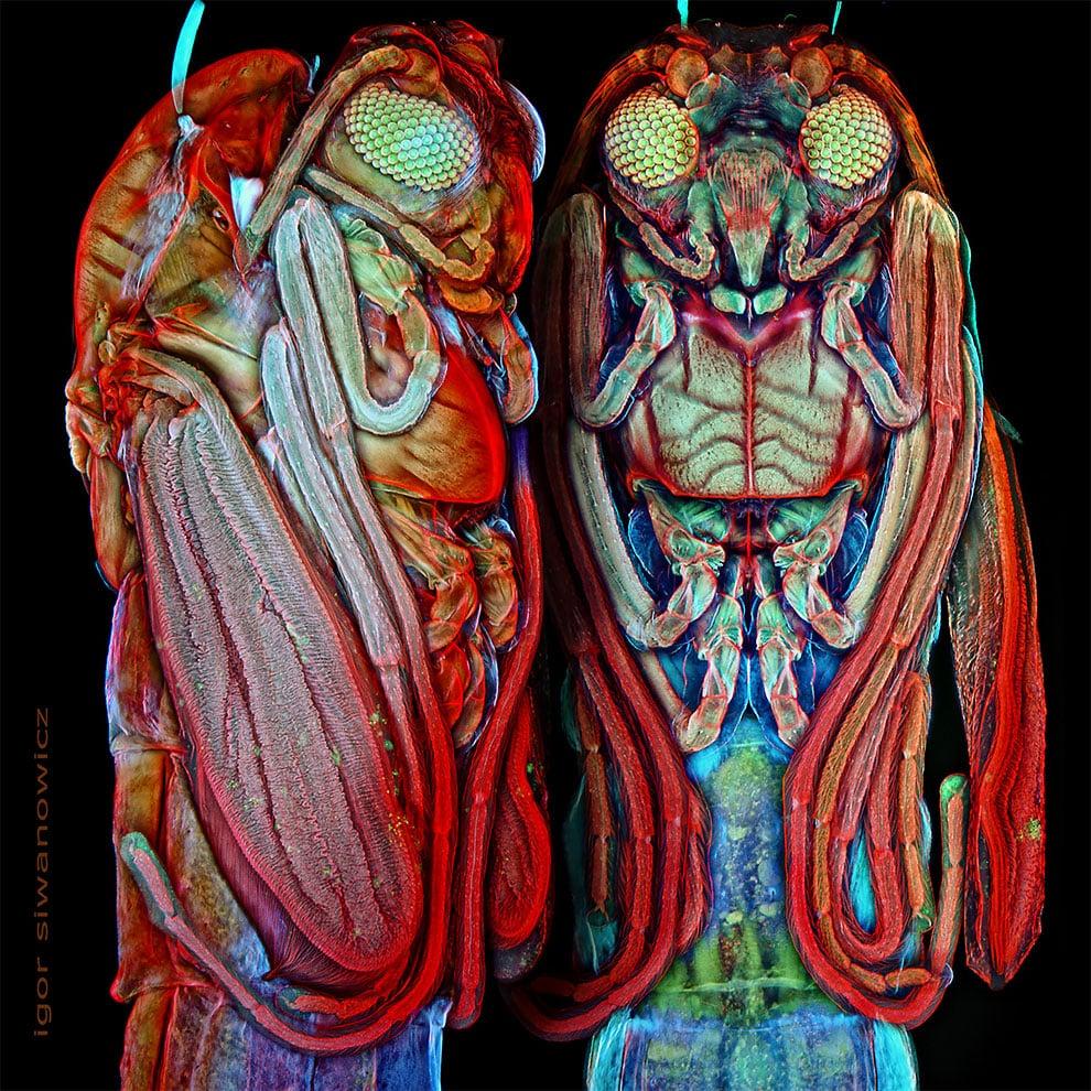 fotografo polaco microscopio fluorescente 2