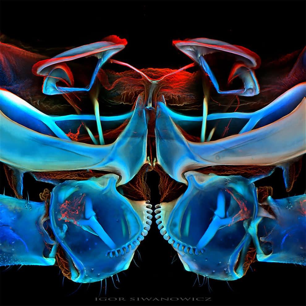 fotografo polaco microscopio fluorescente 4