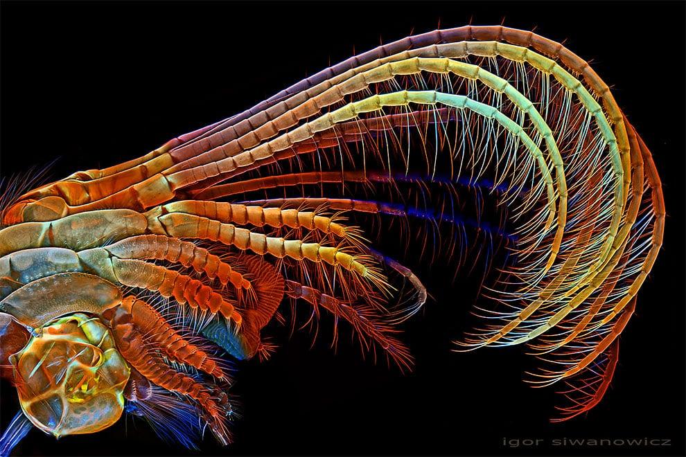 fotografo polaco microscopio fluorescente 6