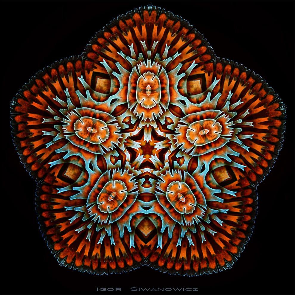 fotografo polaco microscopio fluorescente 9