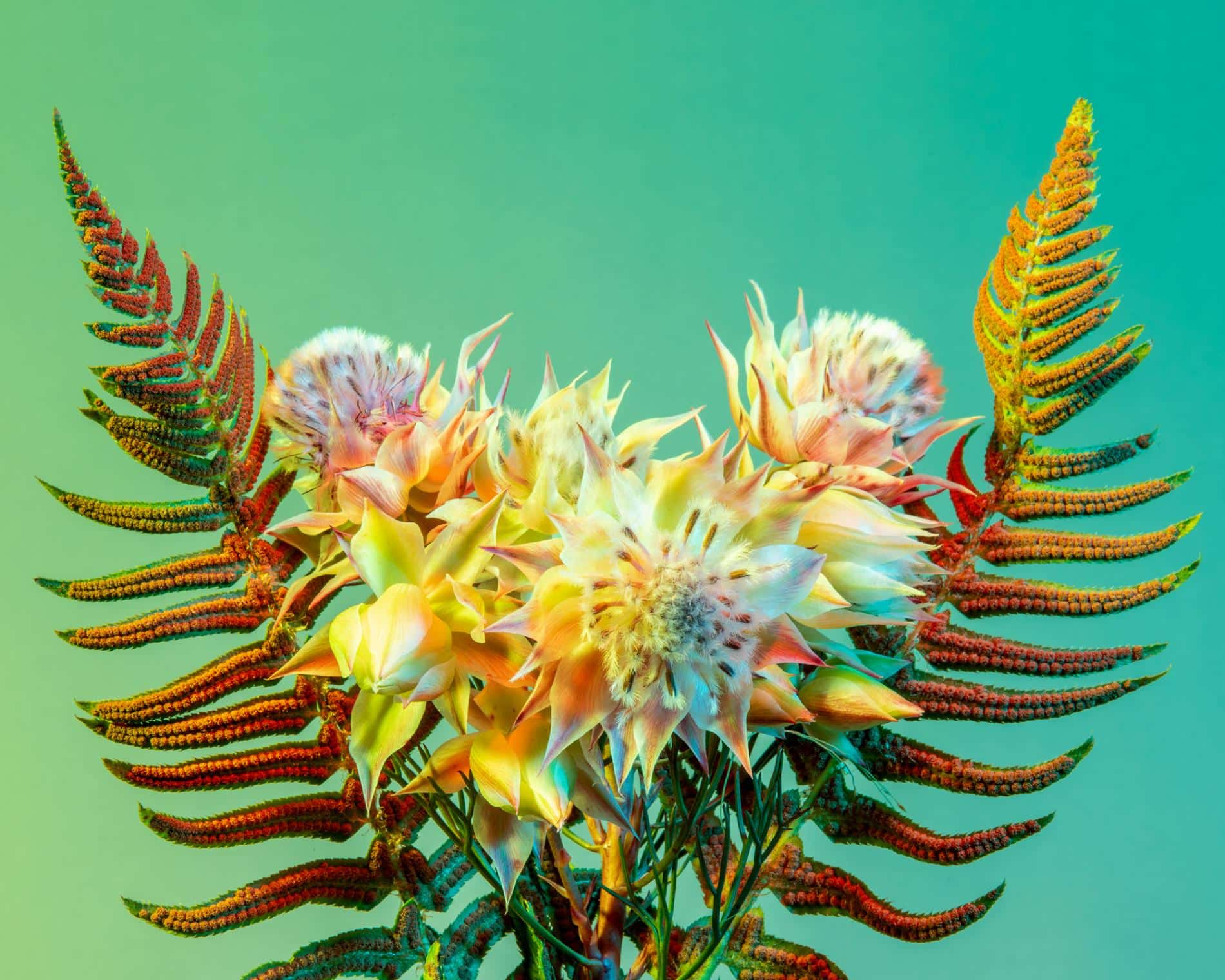 rickert flores botanica de otro mundo bouqeuete