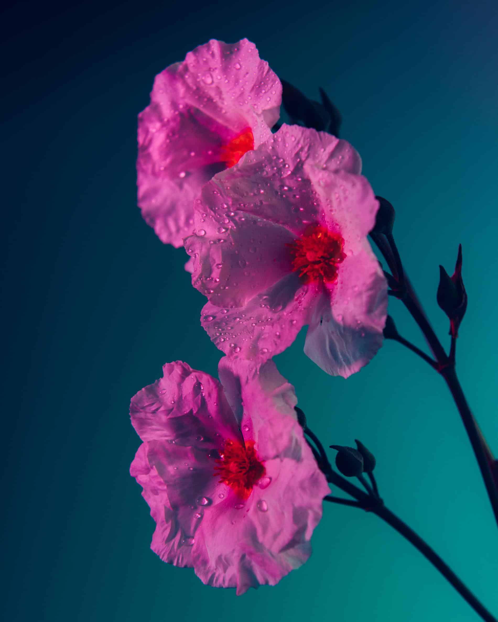 rickert flores botanica de otro mundo for o clock