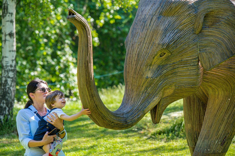 elephant escultura manada medio proyecto coexistance