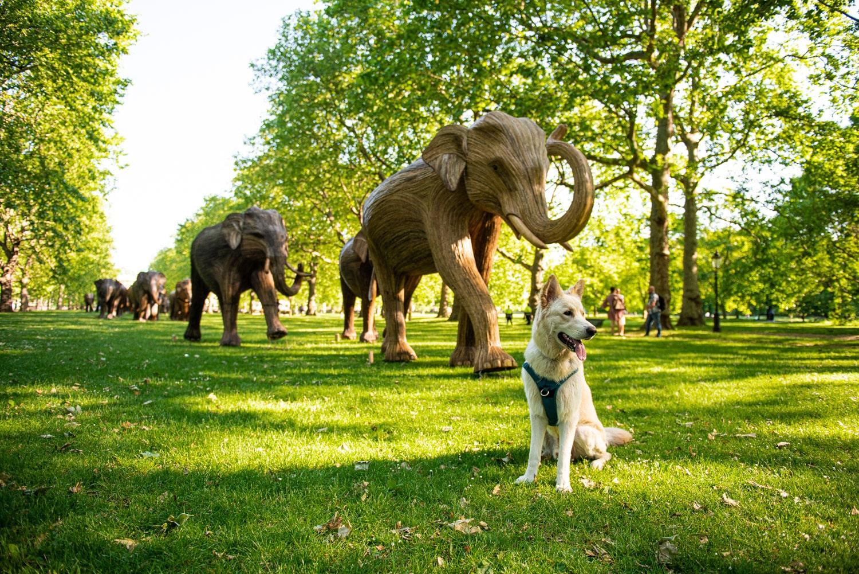 elephant escultura manada medio proyecto urbano